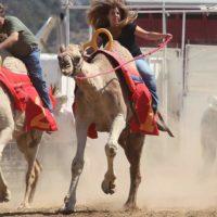 teri-camel-race